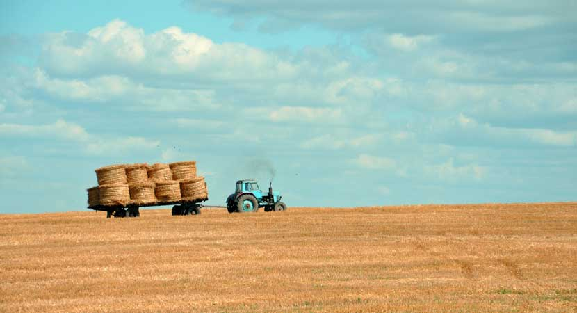 Agricultura y envío de cultivos
