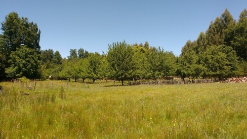 Hermoso Campo de 55 hectareas sureño