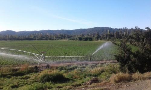 Campo Agricola de 49 hectareas , 3 pivotes