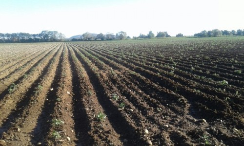 Parcela de 20 hectareas , 2 siembras anuales