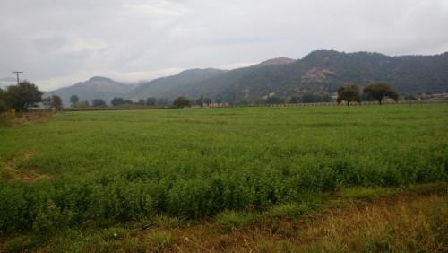 561 ha Mixtas