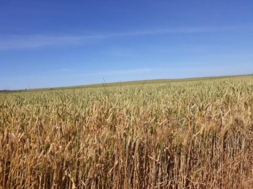 300 ha Mulchen