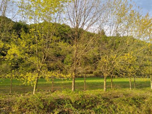 Vendo terrenos de 5000mt2 villa baviera